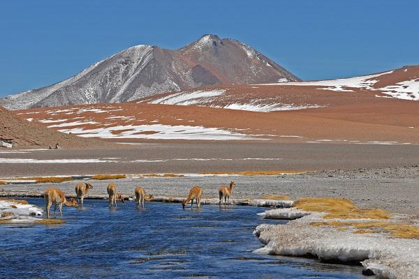 Animales en los Andes