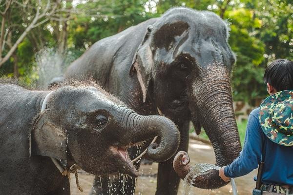 thailand-4028725_1920