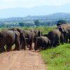 Elefantes en Kidepo