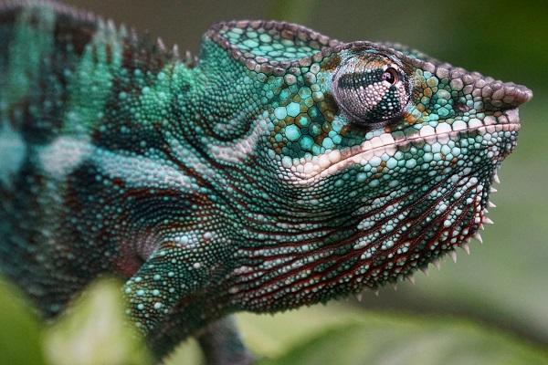 Fauna en Madagascar
