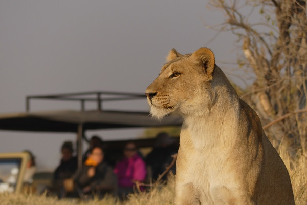 Safari Campemento Lujo Botswana