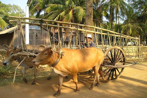 cambodia-445_1920