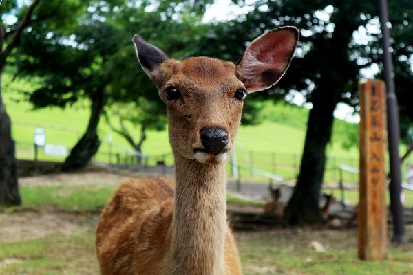 roe-deer-5262889_1920