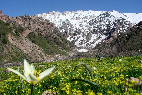 Chimghan Mountains (6)