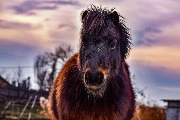 pony-3094422_1920